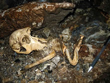 富山県黒部峡谷における鍾乳洞の地球科学的総合解析 -サル穴とニホンザル化石-