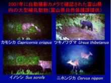 北陸の野生動物について~モグラがいる、クマが出る、イノシシがやってくる~